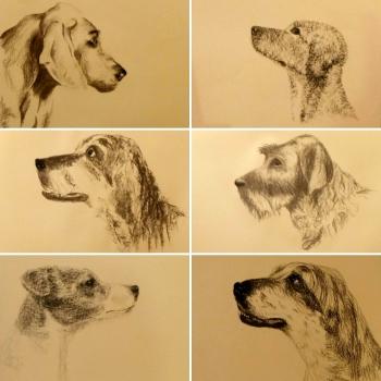 Un premier cours très, très prometteur pour le stage du portrait canin ! Chiens de profil.
