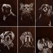 Stage Portrait Canin - Cours 2 - Chiens de face