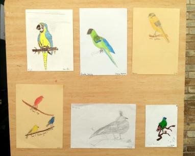 Oiseaux - pastel et crayon