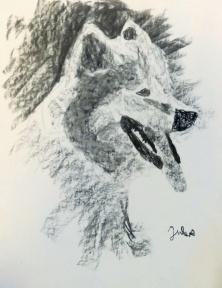 Jules 9 ans - Chien-loup de 3/4 - Fusain