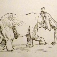 Éléphant - Croquis au feutre